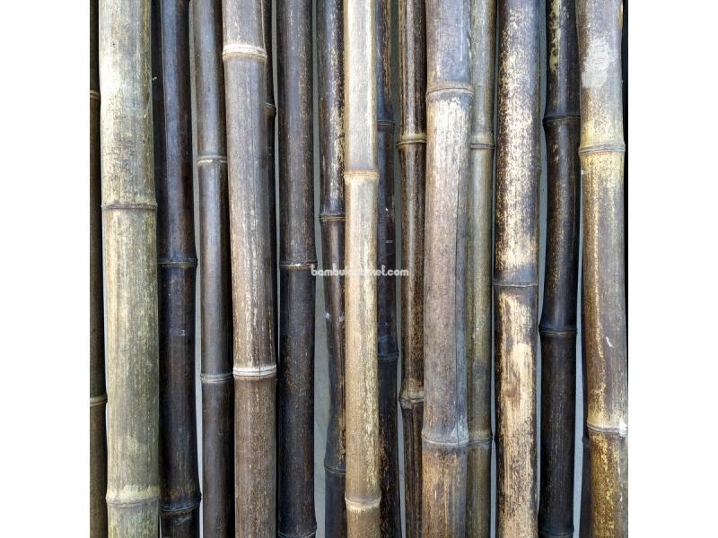 Бамбуковый ствол,  Ø3-4см, L 3м, черный, СОРТ 2