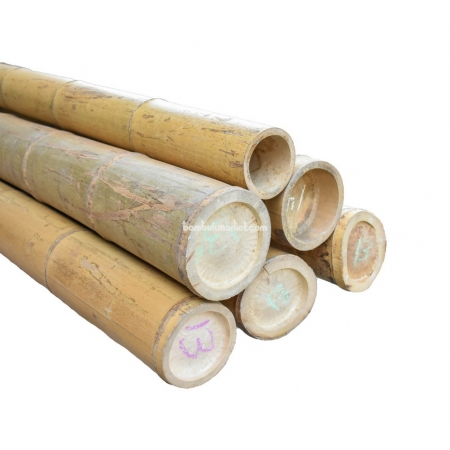 Бамбуковый ствол, Ø13-14см, L 3м, натуральный - фото 1