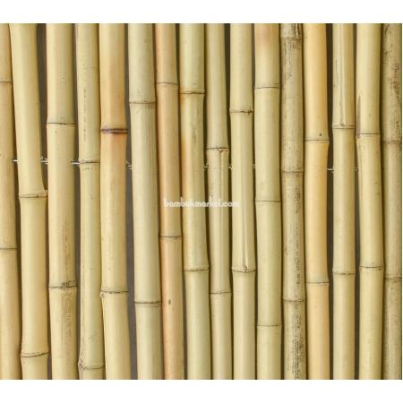 Бамбуковый забор, 2,0х1,0м - фото 1